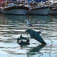 Harbor Scene in Bodrum, Turkey